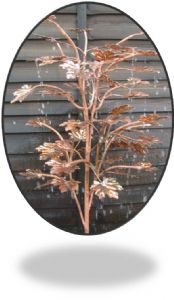 Small Copper Acer Tree Water Feature